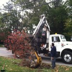 Lowering tree into planting space