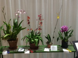 Marty Cokin's Orchids