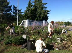 Fall 2014 Garden clean-up